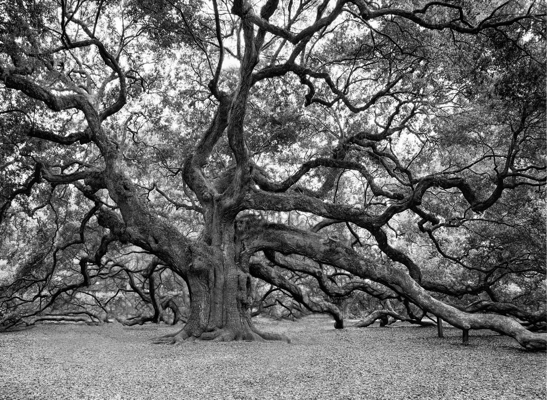 photo arbre page humilité