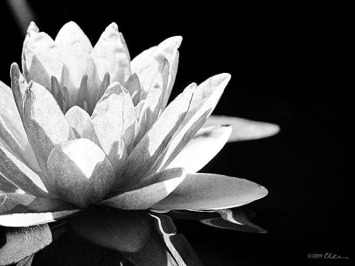Enseignement du Lotus